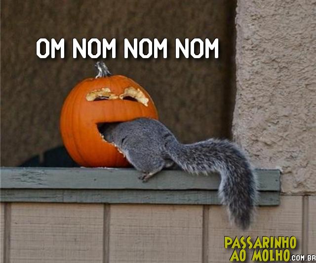esquilo na abóbora