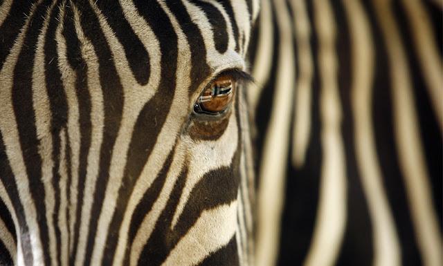 تعّرف على أسرار عالم الحيوانات