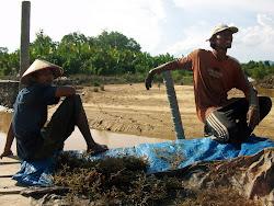 Petani rumput laut di Mansapa Nunukan