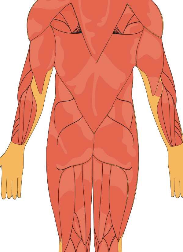 Músculos de la espalda - Foto Montajes de Famosos, fotos raras ...