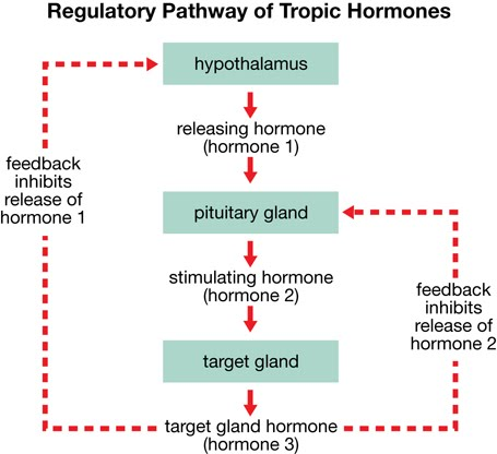 Biology And Geology The Pandas Thumb Hormonal Regulation