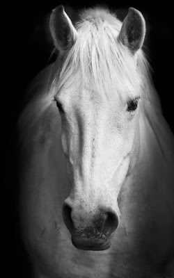 Horses Live Wallpaper 8.0 APK for