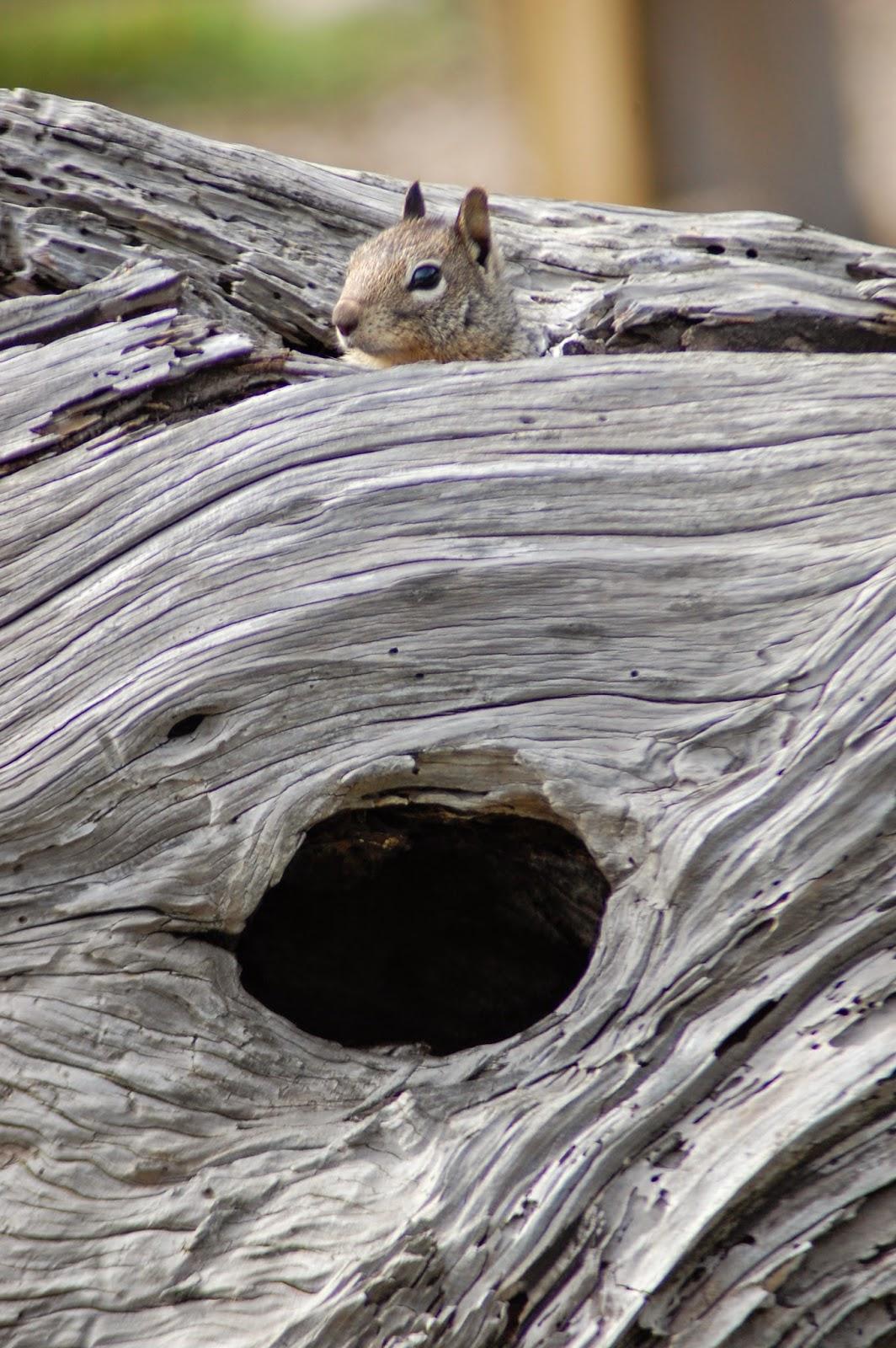 Un écureuil qui joue à cache-cache