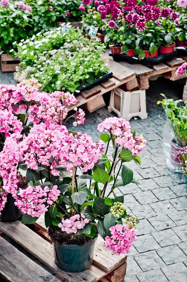 flores copenhague