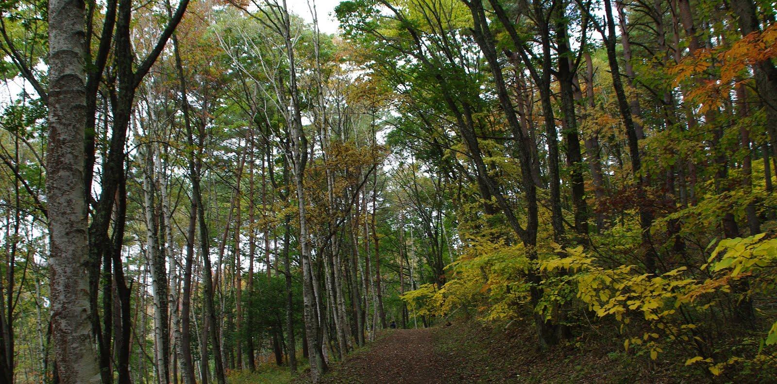 秋の八ヶ岳自然文化園