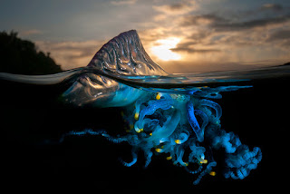 Colourful Jellyfish Photos