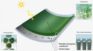 Solar panels with paint grass roofs