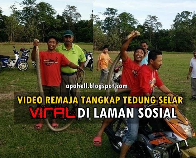Remaja Selamber Tangkap Ular Tedung Selar di Perlis http://apahell.blogspot.com/2015/01/remaja-selamber-tangkap-ular-tedung.html