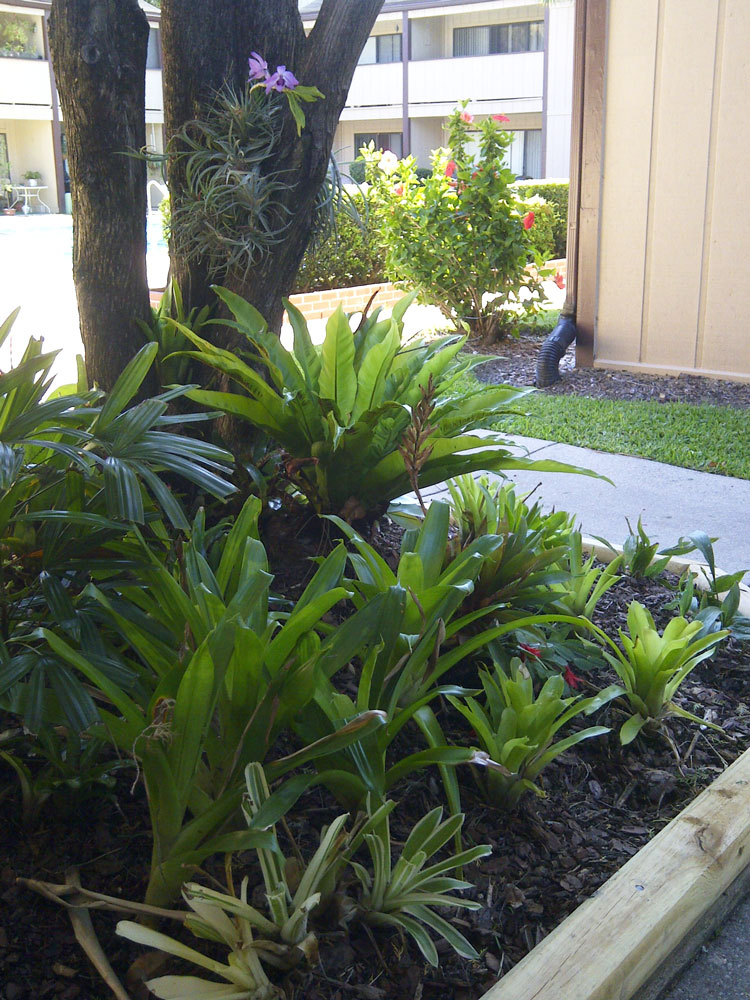 The rainforest garden my small space container garden - Tropical container garden ...