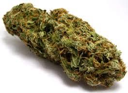 datos sobre la cannabis