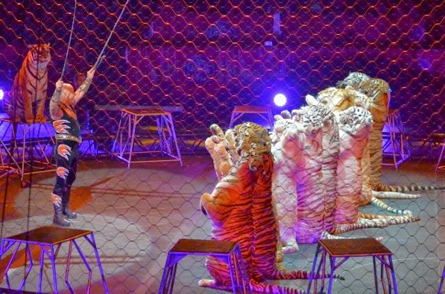 Ringling Circus