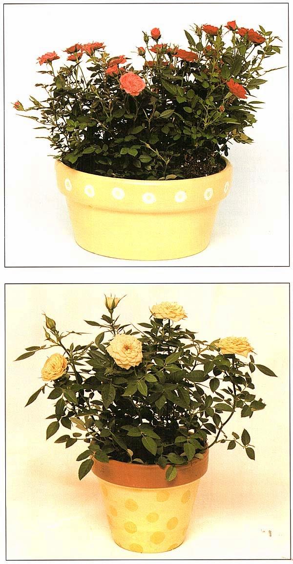 Миниатюрные гибридные розы