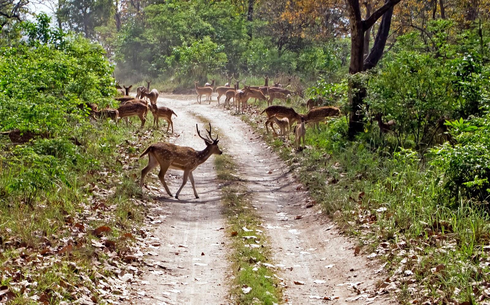 The herd of deer