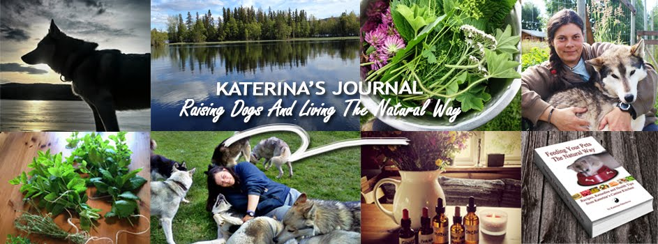 Katerina's Journal