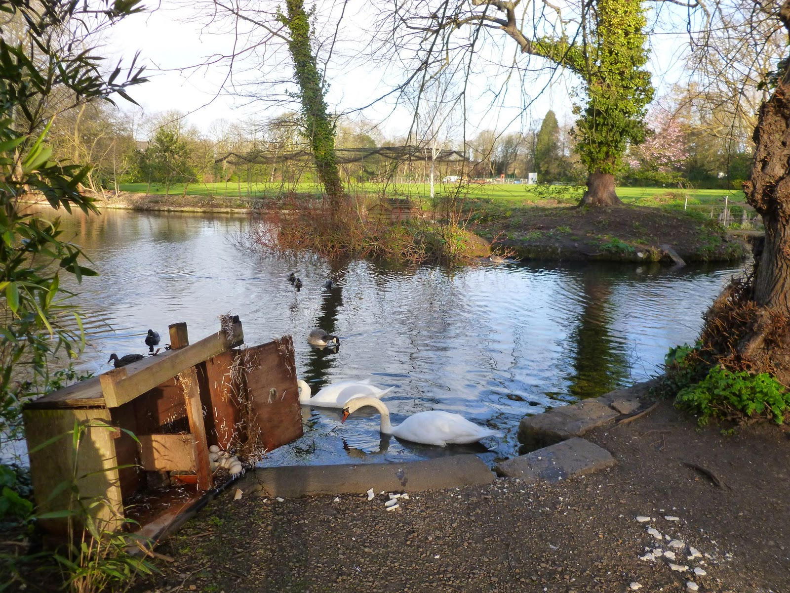 Worcester College Gardeners Disaster For The Waterfowl