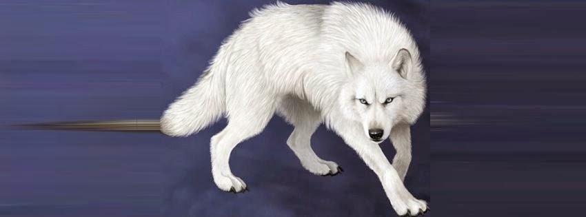 Une belle image de couverture facebook loup blanc