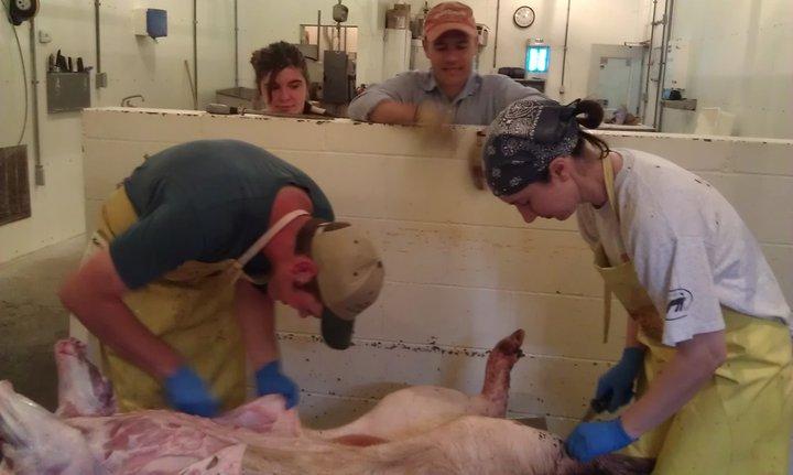 Hog Skinning    Or Adventures On The Kill Floor