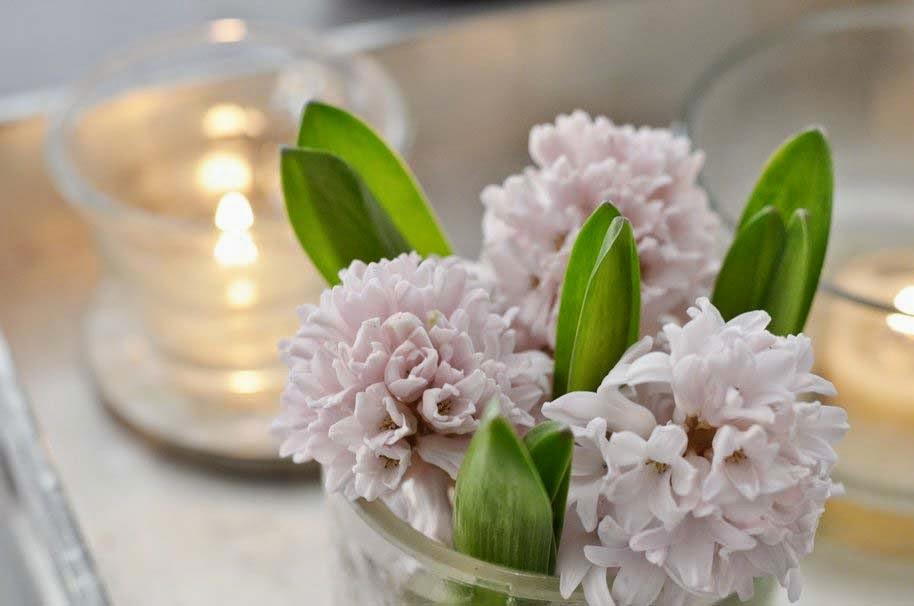 pink-evening-flower