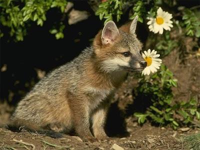 cáo con đáng yêu