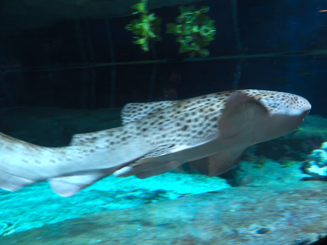 Sea life in Shark Mystique exhibit, Ocean Park, Hong Kong