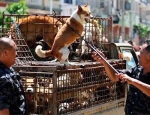 Жестокое обращение с животными в Синапуре
