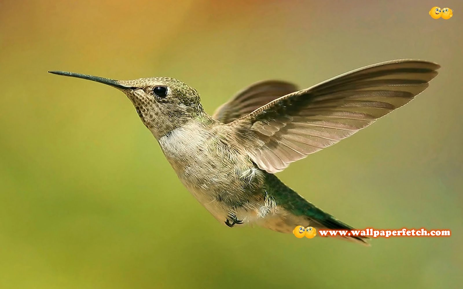 http://1.bp.blogspot.com/-16XeuEitT2k/T1CmHqYgGbI/AAAAAAAAMoU/THcJilO5c60/s1600/hummingbird-9680-1920x1200.jpg