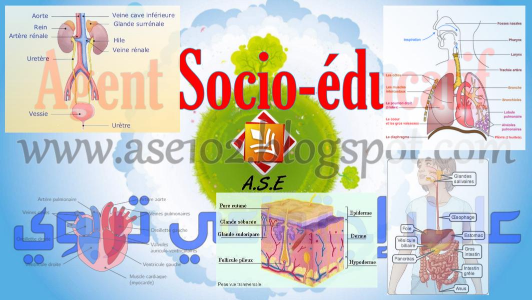 L\'anatomie et la physiologie
