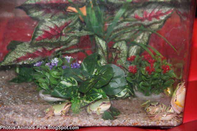 http://1.bp.blogspot.com/-16YsCocQKTQ/TaBL4LH6uJI/AAAAAAAAAm8/2t_YhBc2mKo/s1600/green%2Bfrog_0005.jpg