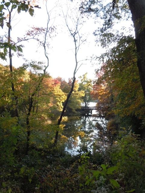 Central Park Fall 2011