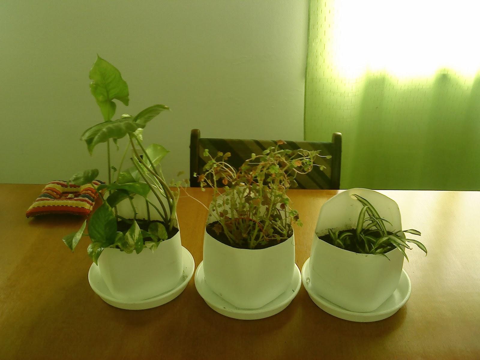 Fitorremediaci n del aire interior macetas autorregables - Plantas del interior ...