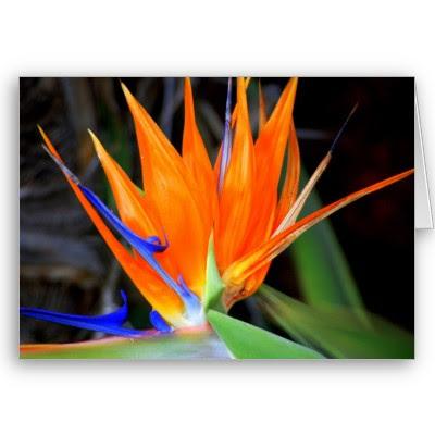 Hình ảnh đẹp nhất của hoa thiên điểu
