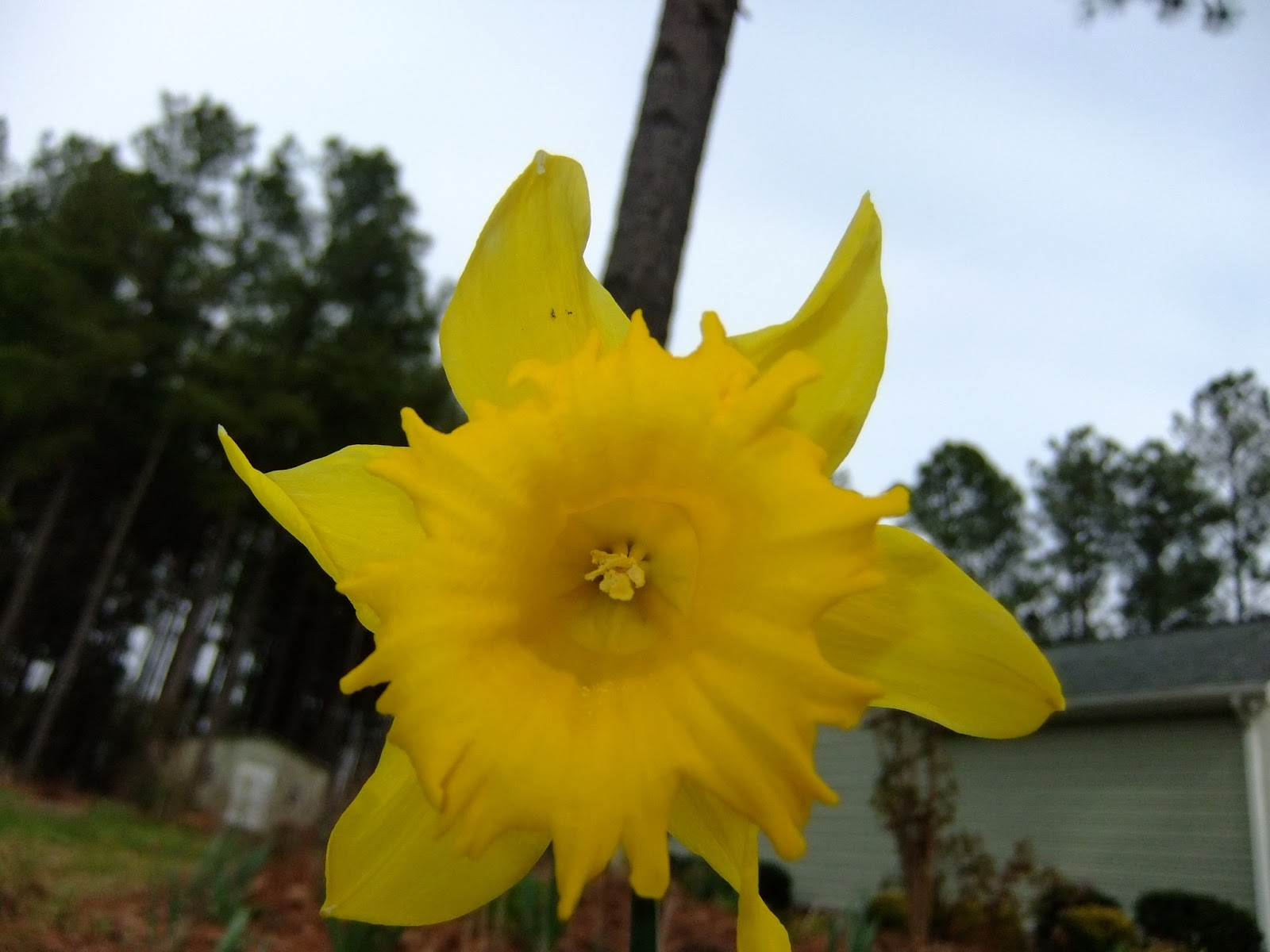 Whats Blooming In My Garden On My Birthday March 15 2013 Heart