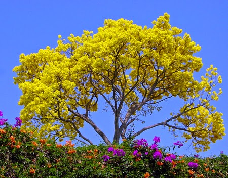 chidinma inspirations tree    beautiful flowers