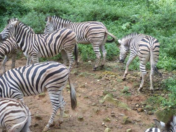 liburan taman safari