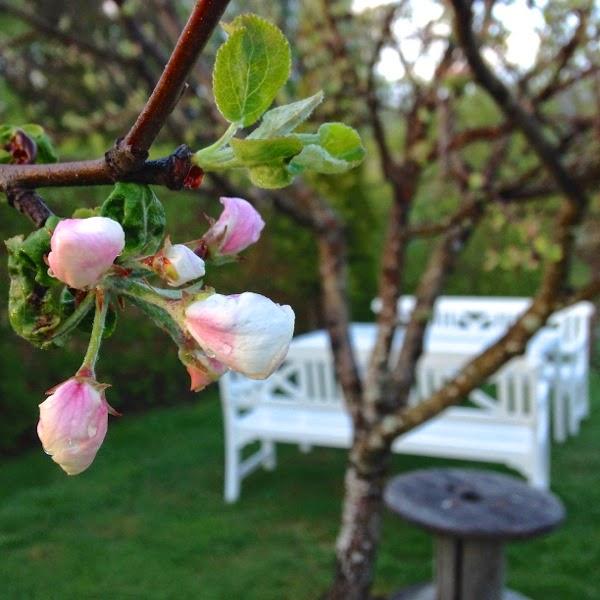 äppelblom hannashantverk