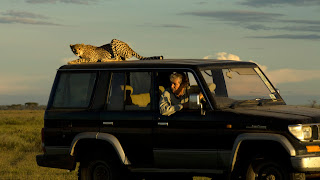 cheetah on top of hunter's jeep