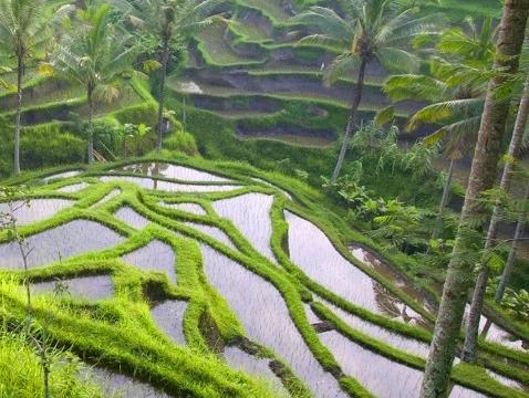 Bali Bird Walks Ubud