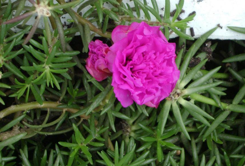 Plantas de sol con flores elegant simple top with plantas - Plantas que aguanten el sol ...