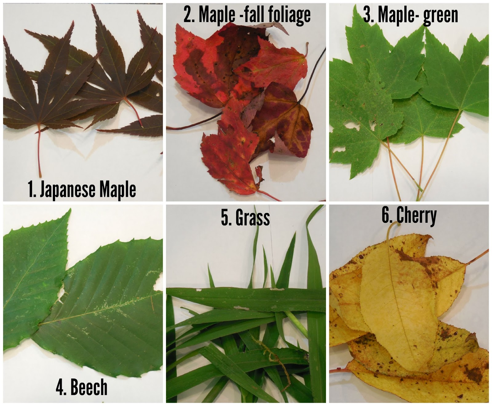 share it science science experiment the hidden colors in a leaf