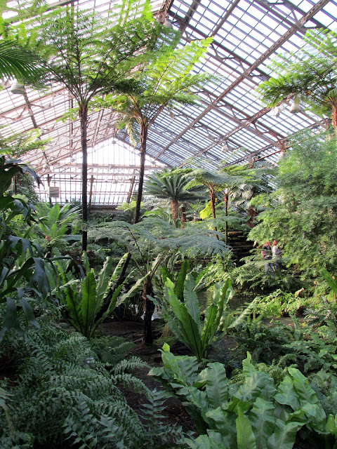 View of Fern Room at Garfield Park Conservatory