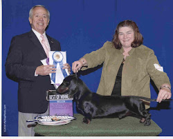 "Dual Champion Holly Hounds Raising Cain at Carrdox ""Casey"""