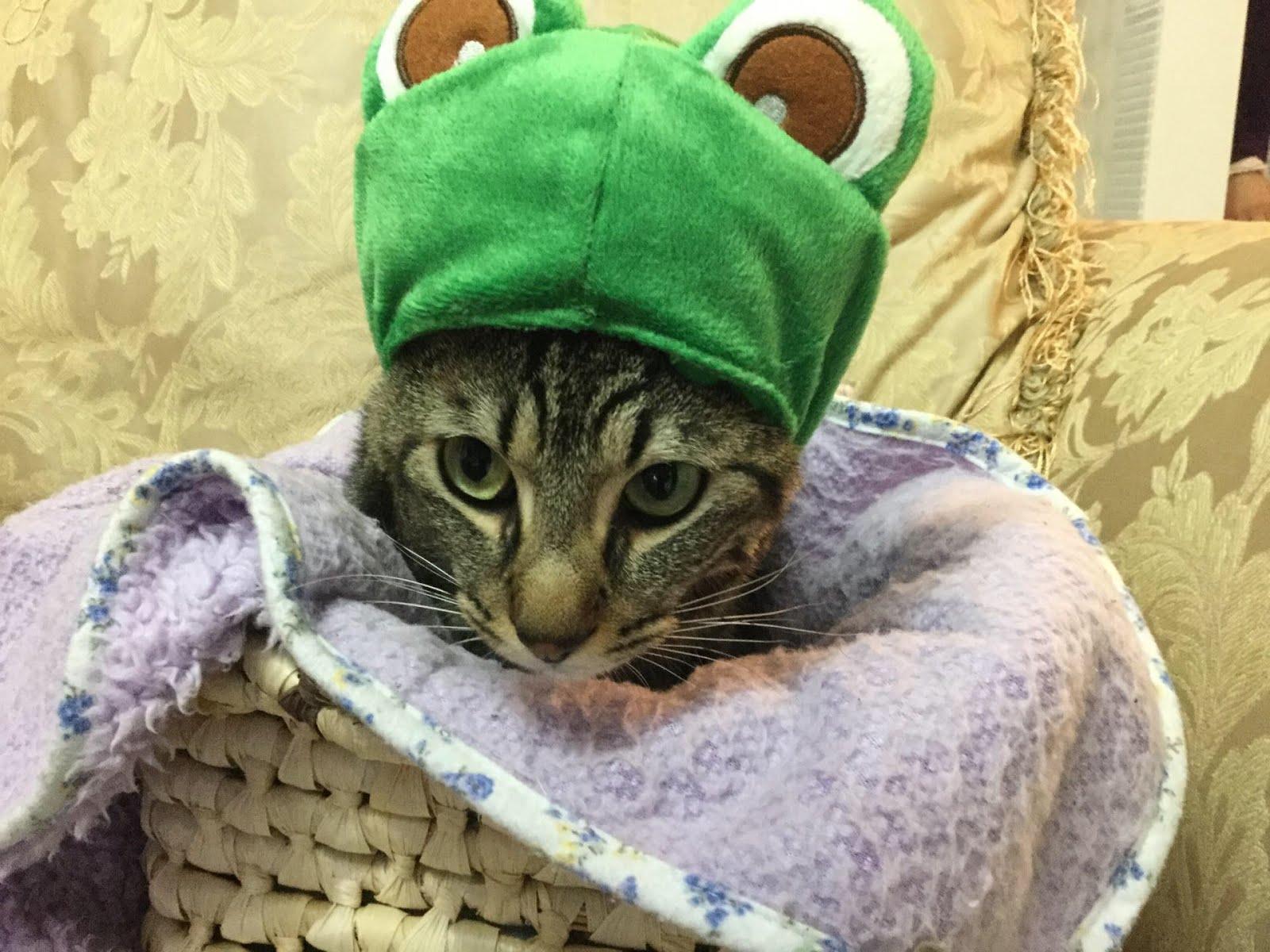 Nino,o gato mais lindu e mimado.