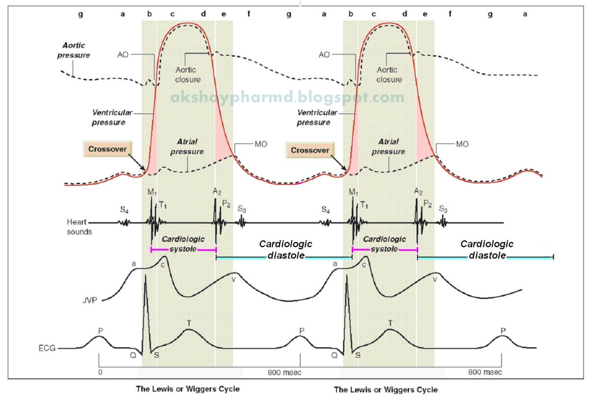 Mechanical and electrical events of the cardiac cycle pharmd india atrial systole is the contraction of the myocardia of the left and right atriarmally both atria contract at the same time70 of the blood flows pooptronica