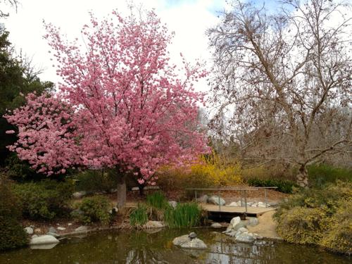 NowThisLife.com - Los Angeles Arboretum