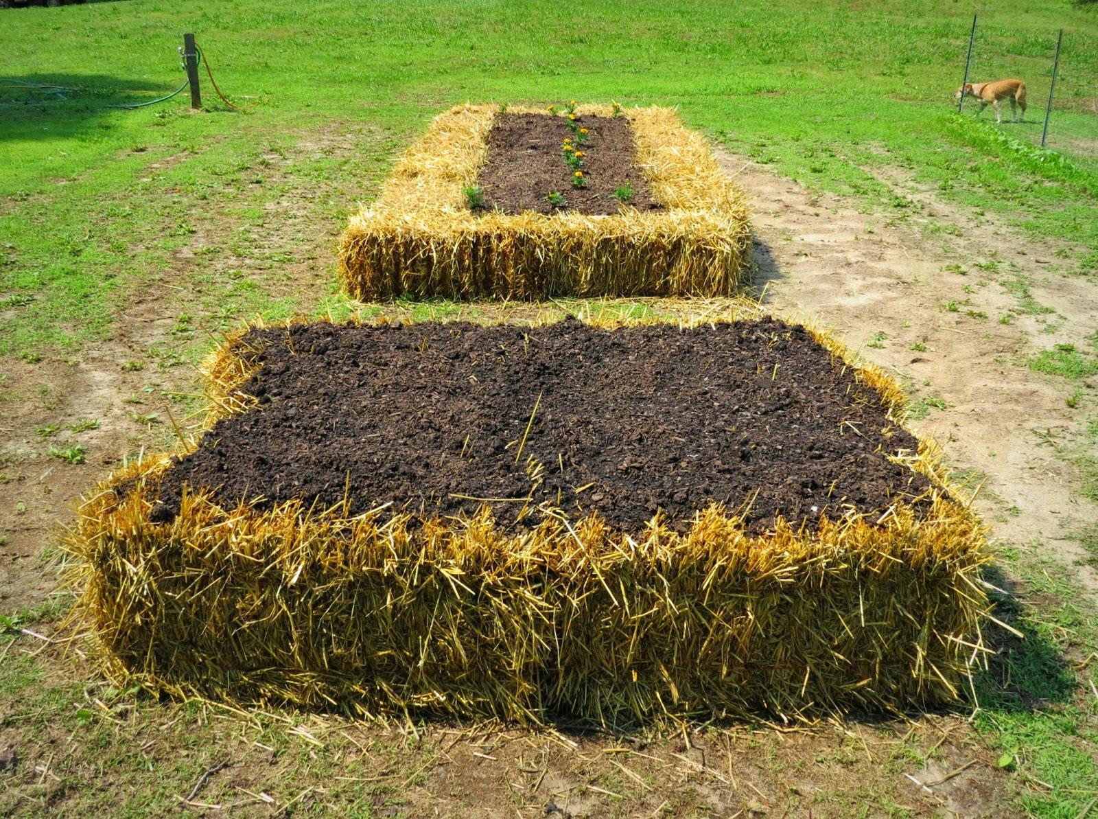Been Gardening...Bin Gardening: Hügelkultur and Straw Bale Gardening ...