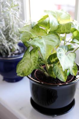 AnglesbyAngela plants my week in objects
