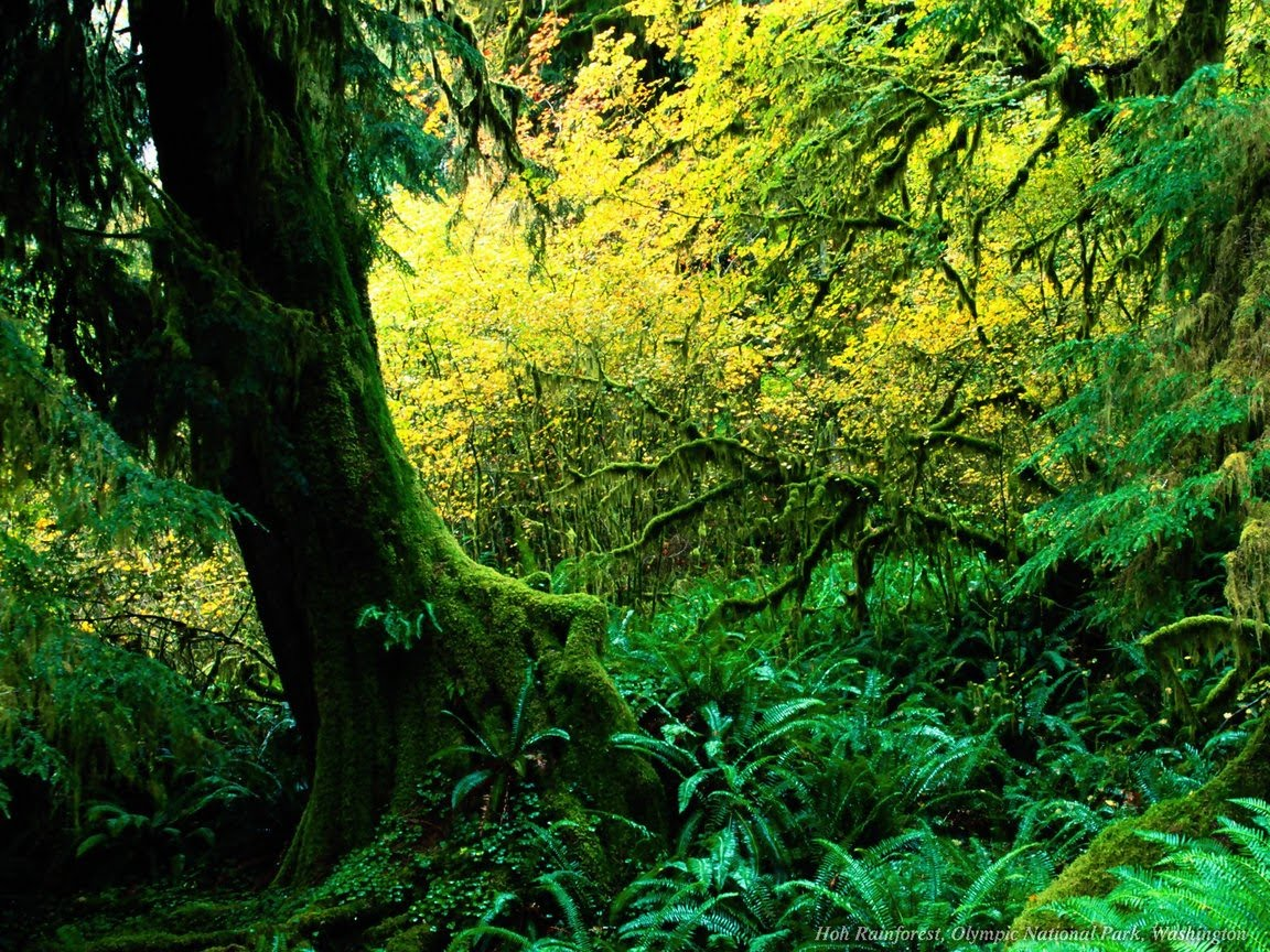 green tree forest - photo #10