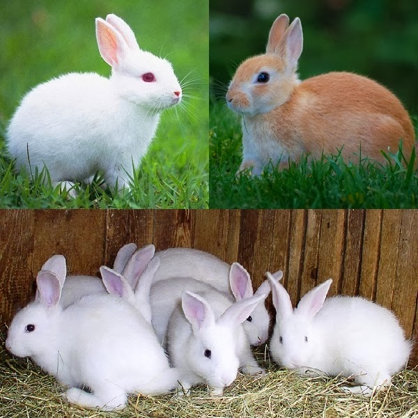 Start a Rabbit Farm to Earn Money