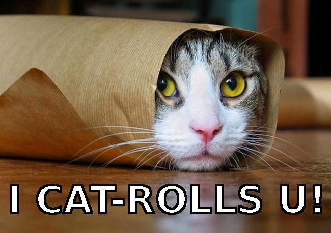cat roll meme