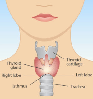 Destroy Thyroid Gland